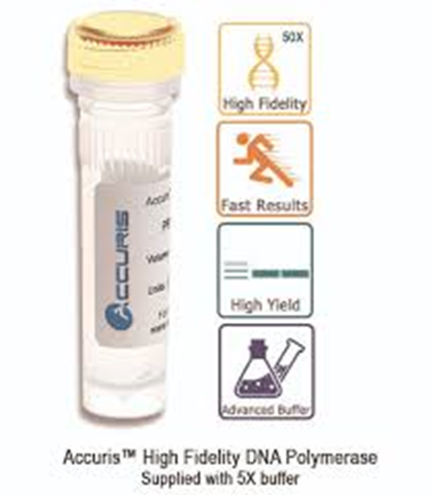 Picture of PR1000-HF-1000 - Accuris High Fidelity DNA Polymerase, 1000 Units