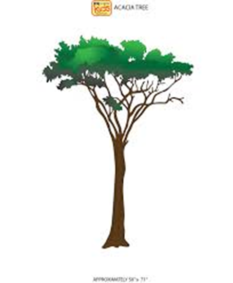 Picture of 14-CC - Acacia Tree Wall Sticker